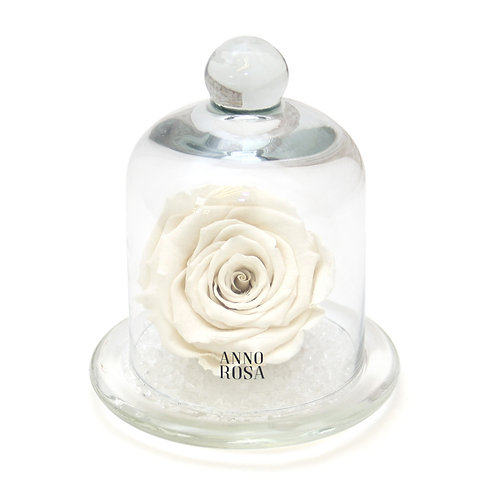 CLASSIC BELLE SINGLE INFINITY ROSE - IVORY