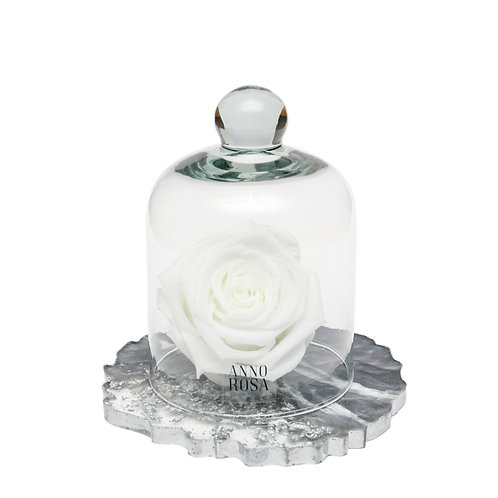 RESIN BELLE SINGLE INFINITY ROSE - WHITE