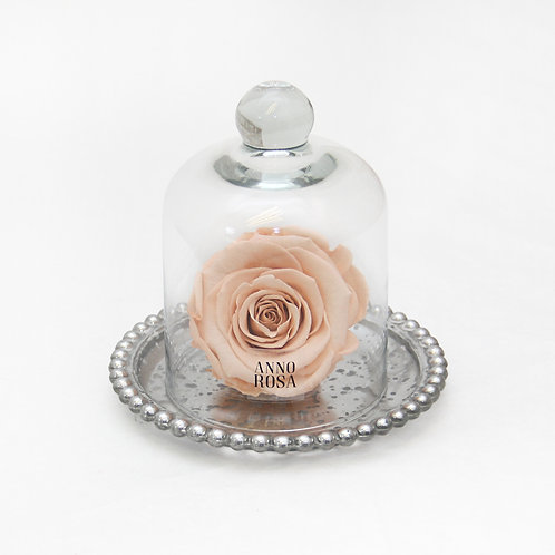Peach Preserved Rose That Lasts A Year