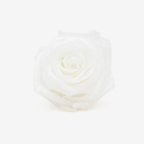White Preserved Infinity Rose That Lasts A Year