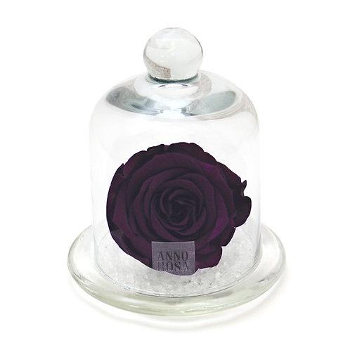 CLASSIC BELLE SINGLE INFINITY ROSE - PURPLE