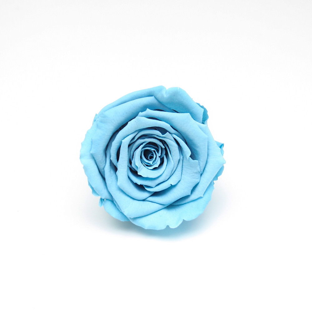 Blue Eternity Rose That Lasts A Year