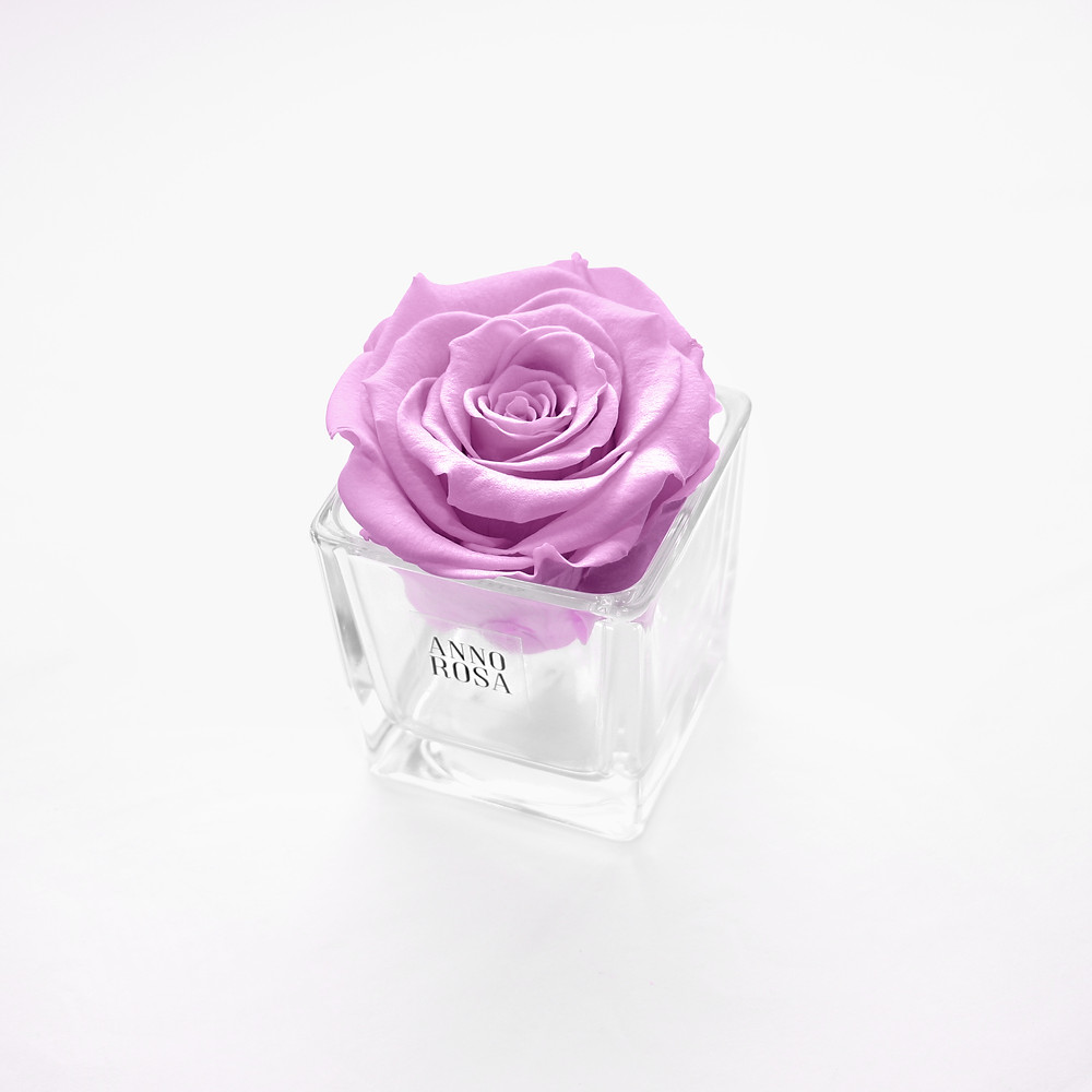 year long roses, forever roses, infinity roses, roses, rose decor, home decor, home decor, luxury infinity roses, roses, anno rosa, roses, luxury roses, lilac roses, roses, infinity roses, year long roses, roses, rose decor, home decor, home decor ideas, ideas for home decor