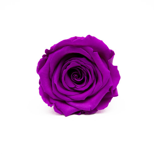 VIOLET ROSE REPLACEMENT