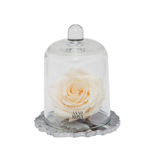 DELUXE CREAM RESIN BELLE SINGLE INFINITY ROSE