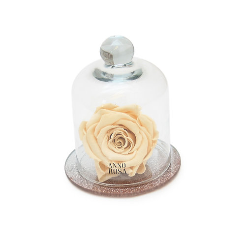 ROSE GOLD BELLE SINGLE INFINITY ROSE - CHAMPAGNE