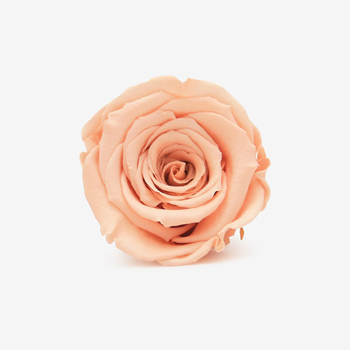 Peach Preserved Infinity Rose That Lasts A Year