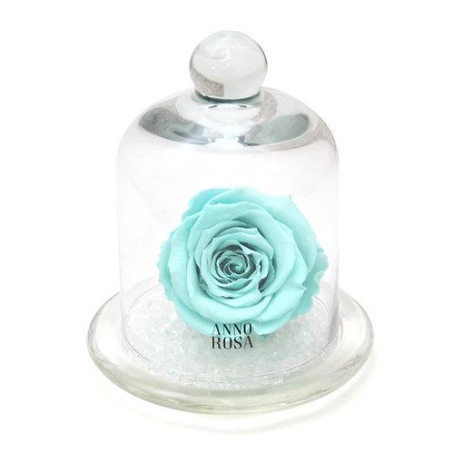 CLASSIC BELLE SINGLE INFINITY ROSE - AQUA