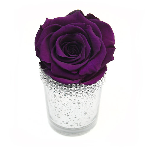 Purple Infinity Rose that lasts a year