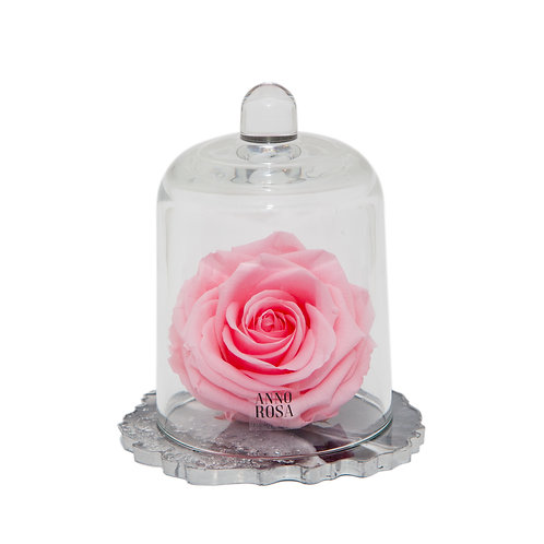 DELUXE PINK RESIN BELLE SINGLE INFINITY ROSE