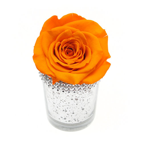 Orange Infinity Rose that lasts a year