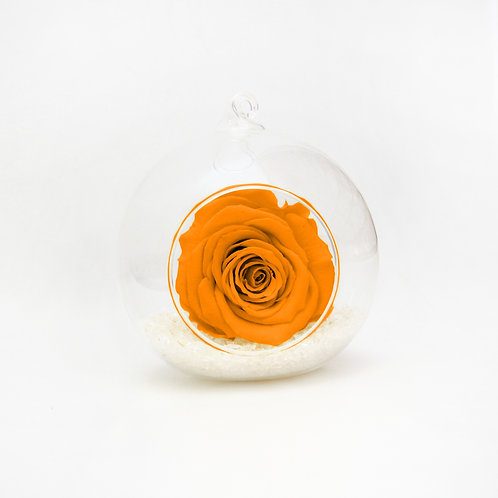 Orange Bauble Rose