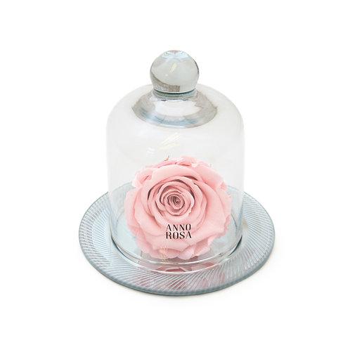 GEOMETRIC BELLE SINGLE INFINITY ROSE - PINK