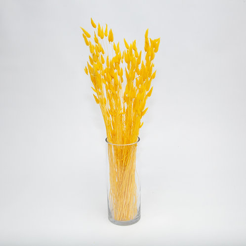 YELLOW LAGURUS BUNNY TAILS  (STEMS ONLY NO VASE)