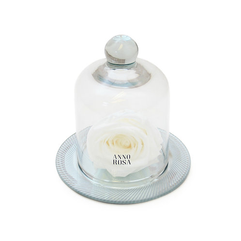 GEOMETRIC BELLE SINGLE INFINITY ROSE - WHITE
