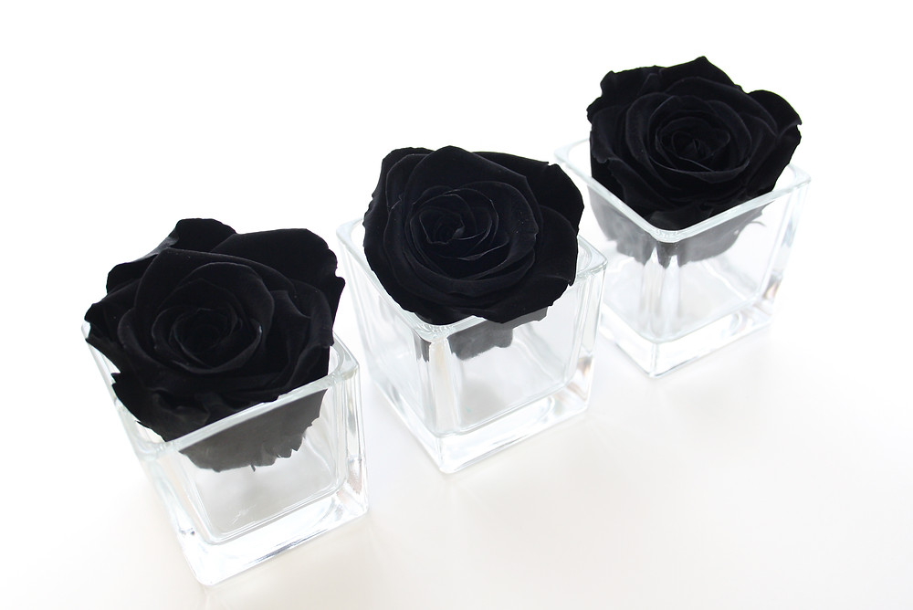 preserved roses, preserved rose, infinity roses, forever rose, year long roses, roses that last a year, year long roses, black roses, black rose, home decor, first home, first home decor, first home interior, home decor, home interior, single roses, black roses, black, black roses, year long roses