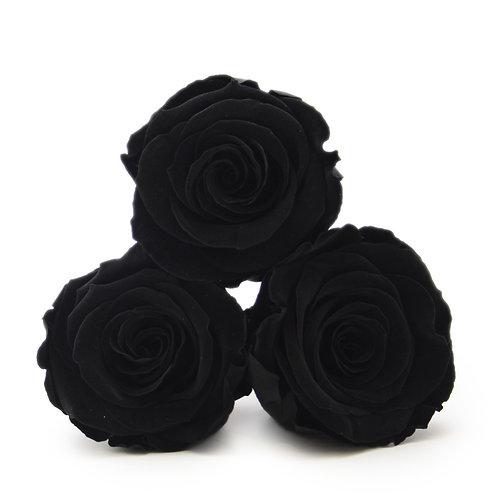 INFINITY ROSES - BLACK