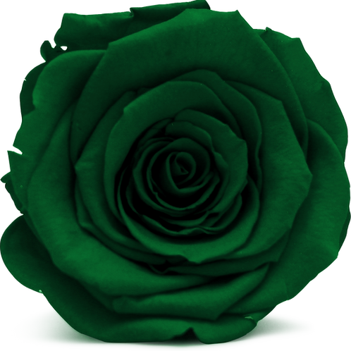 GREEN ROSE REPLACEMENT