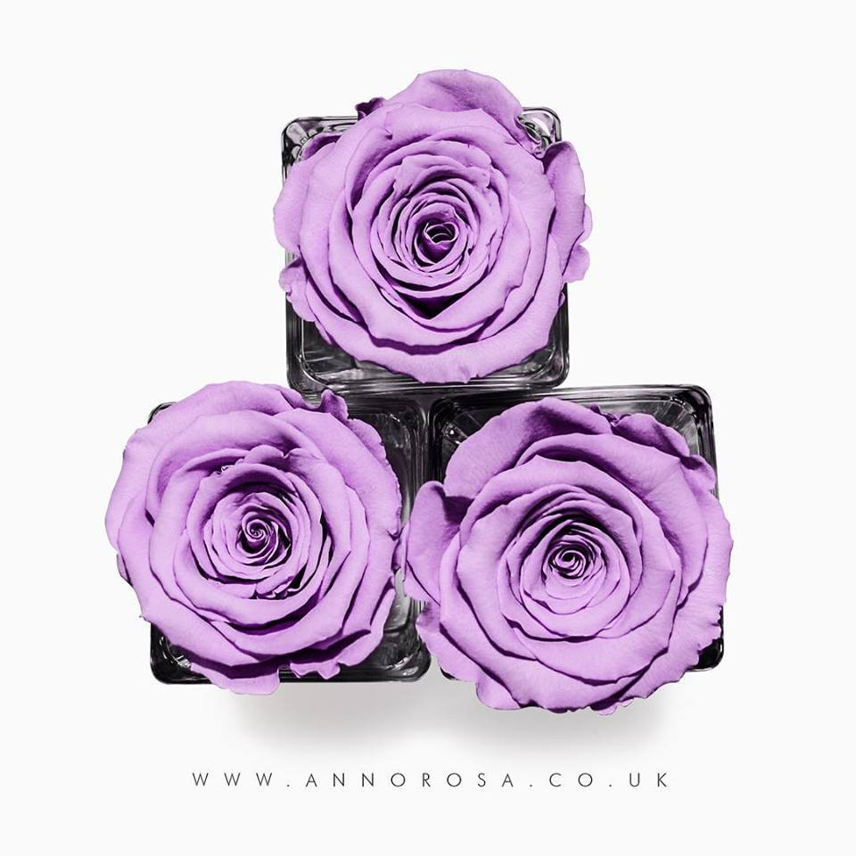 infinity roses, year long roses, forever roses, eternal roses, infinity roses, roses that last a year, year long, gift idea, gifts for her, valentines day ideas, valentines day ideas for her, girlfriend valentines day ideas, valentines day ideas, valentines day