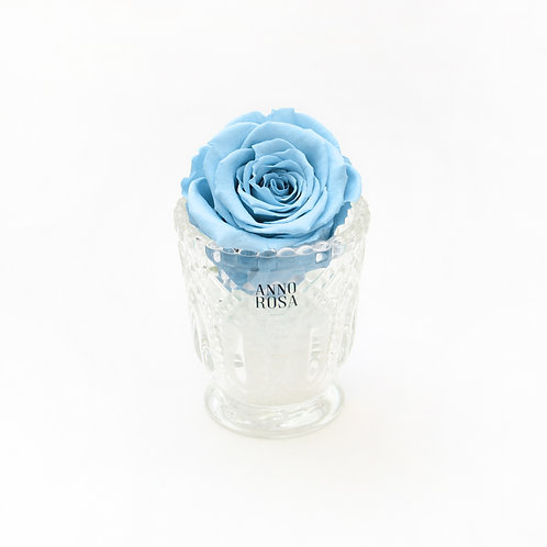 Baby Blue Year Long Rose