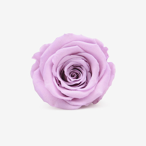 Lilac Preserved Infinity Rose That Lasts A Year