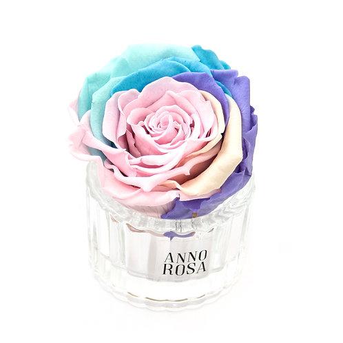 ELEGANT INFINITY ROSE - RAINBOW