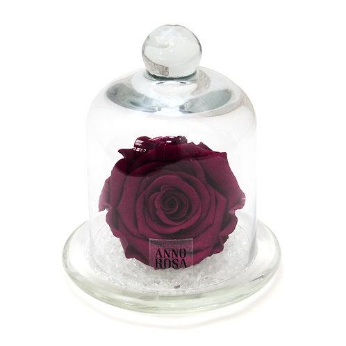 CLASSIC BELLE SINGLE INFINITY ROSE - WINE
