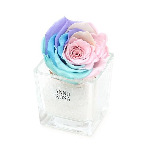 SINGLE INFINITY ROSE - RAINBOW