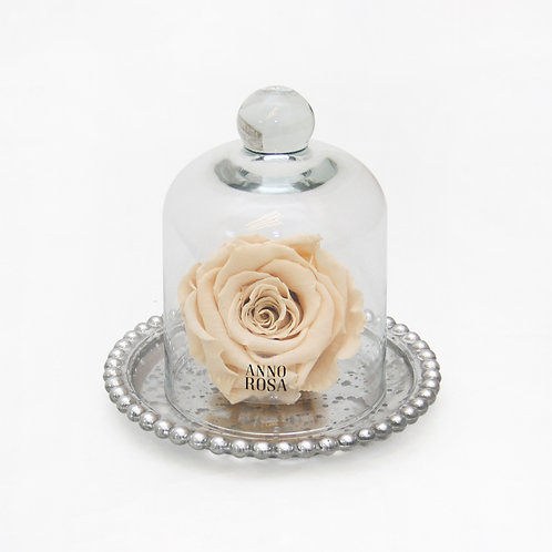 ANTIQUE BELLE SINGLE INFINITY ROSE - CHAMPAGNE