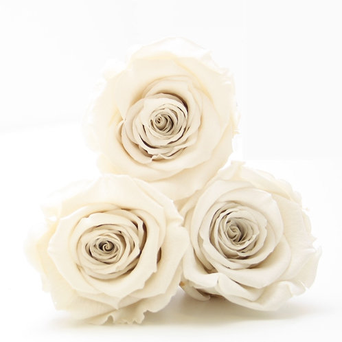 Ivory roses that will last a year