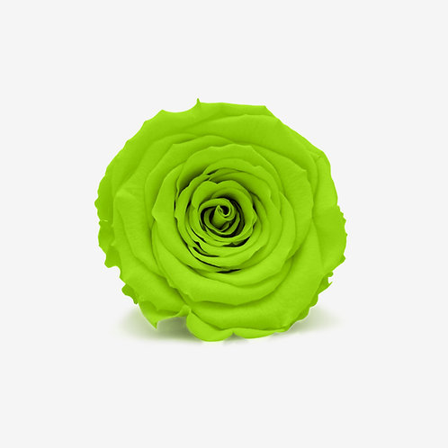 Bright Green Infinity Rose