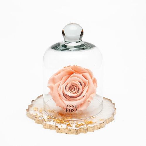 RESIN BELLE SINGLE INFINITY ROSE - PEACH