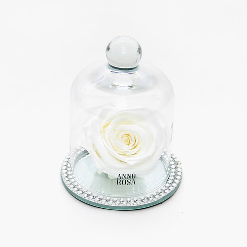 White Rose that lasts a year