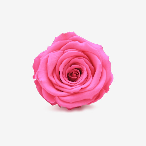 Fuchsia Preserved Infinity Rose That Lasts A Year