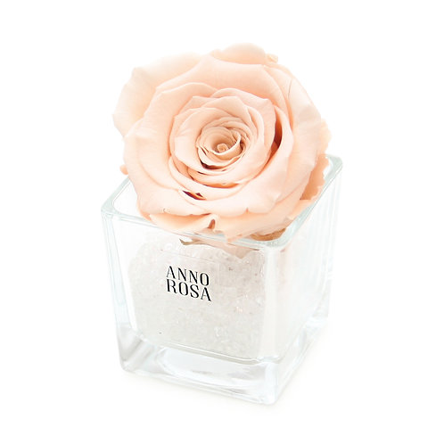 SINGLE INFINITY ROSE - PEACH