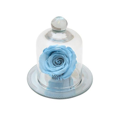 GEOMETRIC BELLE SINGLE INFINITY ROSE - BABY BLUE