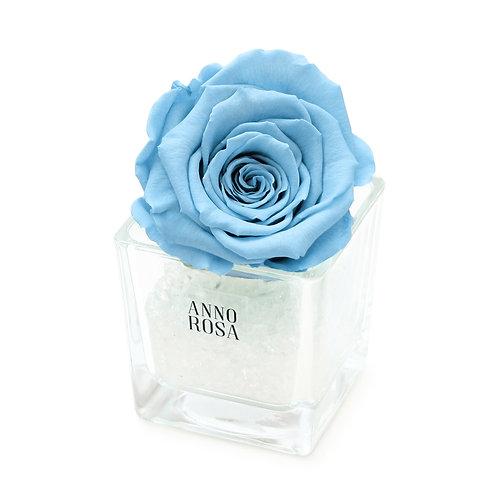 SINGLE INFINITY ROSE - BABY BLUE