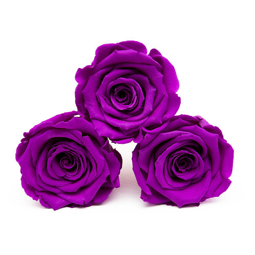 INFINITY ROSES - VIOLET