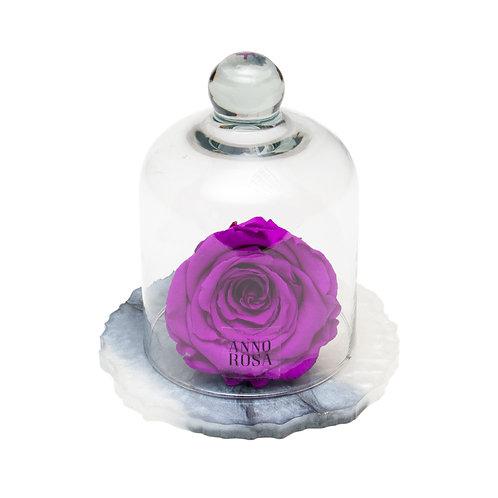 MARBLE BELLE SINGLE INFINITY ROSE - VIOLET