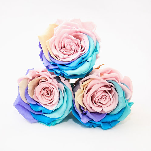 Rainbow Roses that last a year
