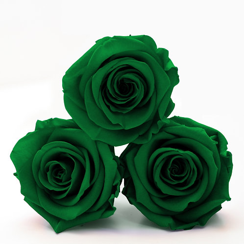 Green Preserved Eternity Rose that lasts a year
