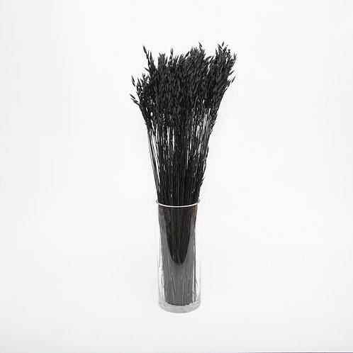 BLACK AVENA GRASS  (STEMS ONLY NO VASE)