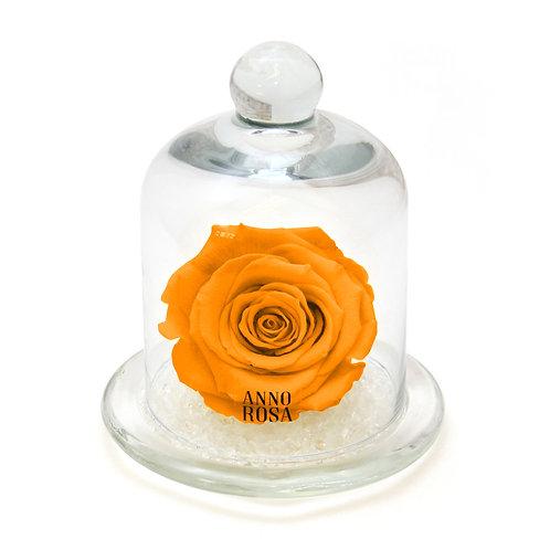 CLASSIC BELLE SINGLE INFINITY ROSE - ORANGE