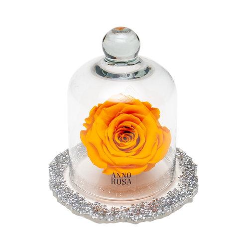 DIAMANTE BELLE SINGLE INFINITY ROSE - ORANGE