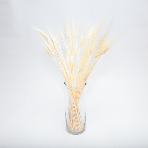 LIMITED EDITION BEIGH TRICITUM STEMS– 30 STEMS (STEMS ONLY NO VASE)