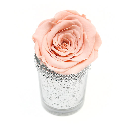 Peach Infinity Rose that lasts a year
