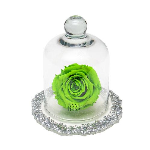 DIAMANTE BELLE SINGLE INFINITY ROSE - BRIGHT GREEN