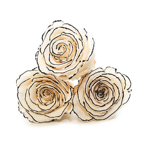 INFINITY ROSES - ZEBRA