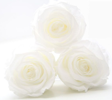 preserved roses, infinity roses, forever roses, year long roses, eternity roses, eternal rose, roses that dont die, forever, rose, white rose, roses for decor, home interior, home inspired, home decor ideas, home decor inspo, roses, bed room inspo, first home inspo, first home,
