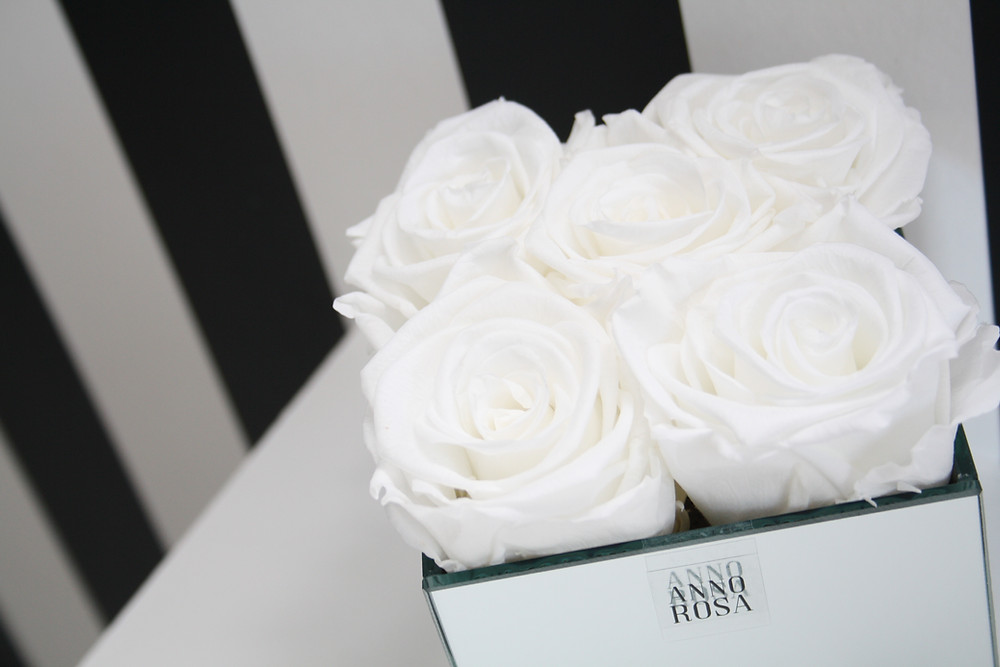 White Preserved Infinity Roses